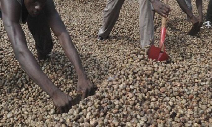 Côte d'Ivoire,prix noix de cajou,conseil des ministres,2019