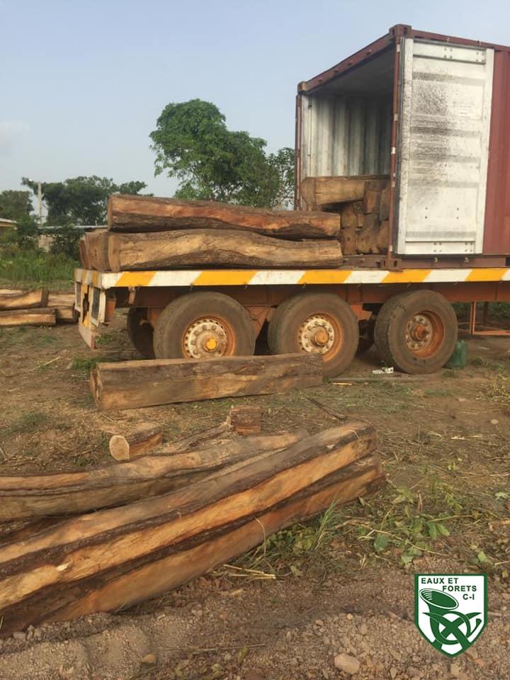 Côte d'Ivoire,ministère des eaux et forêts,trafic de bois de vène
