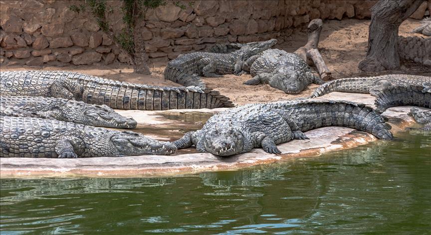 Yamoussoukro,crocodiles,sapeurs-pompiers