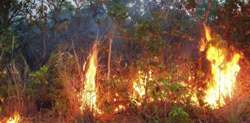 Incendie,Amazonie,Aide financière,Brésil