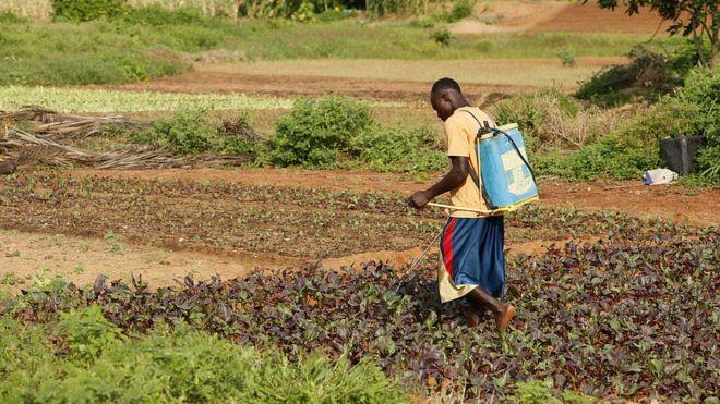Burkina Faso,Aliments contaminés
