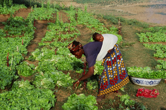 Journée mondiale de la femme rurale