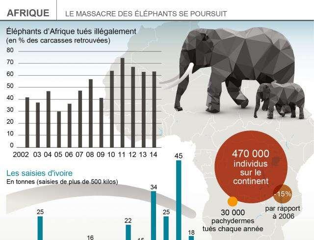Éléphants,Ivoire,Animal
