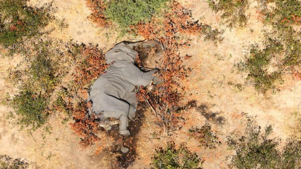 Botwana,Mort d'éléphants,mystère
