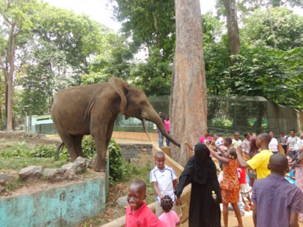 cote-divoire-un-employe-de-zoo-licencie-pour-avoir-denonce-la-maltraitance-des-animaux