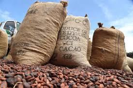 Producteurs,Cacao,Visite d'Etat,Alassane Ouattara