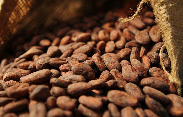 cote-divoire-le-prix-du-cacao-suscite-une-crainte-chez-les-planteurs