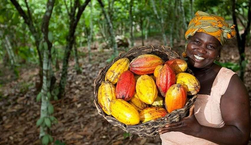 cacao-les-producteurs-ivoiriens-menacent-de-suspendre-leur-collaboration-avec-des-chocolatiers-et-industriels