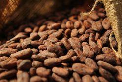 Côte d'Ivoire,prix de cacao,craintes chez les planteurs