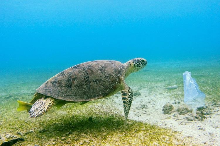 madagascar-19-malgaches-meurent-apres-avoir-mange-une-tortue-de-mer