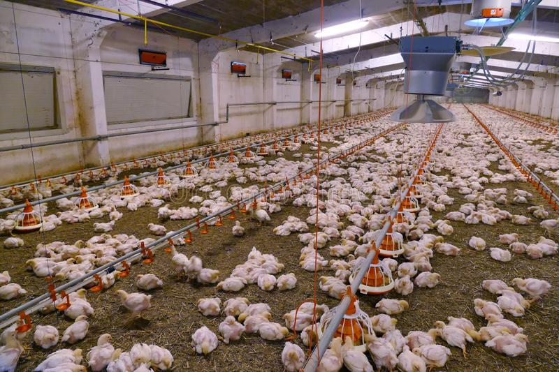 un-foyer-de-grippe-aviaire-declare-a-grand-bassam-les-precautions-a-prendre