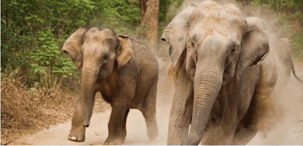 lakota-un-elephant-attaque-violement-un-paysan